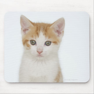 Studio shot of kitten mouse pad