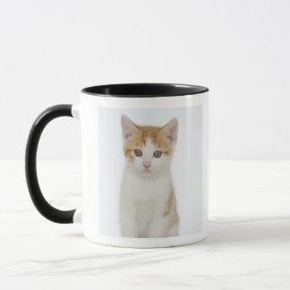 Studio shot of kitten mug