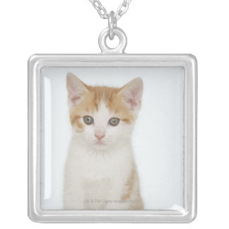 Studio shot of kitten silver plated necklace
