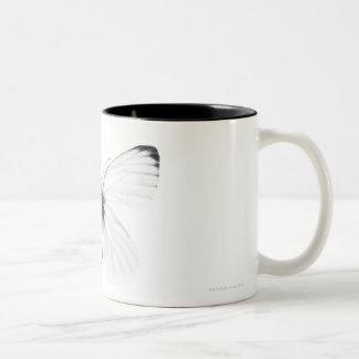 Studio shot of sharp-veined white butterfly Two-Tone coffee mug