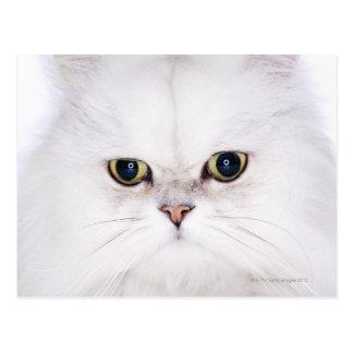Studio shot of white Persian cat Postcard