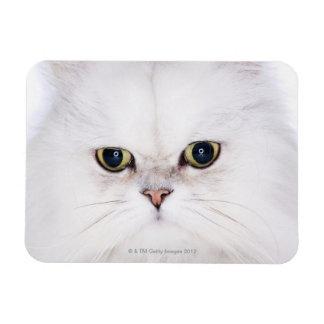Studio shot of white Persian cat Rectangle Magnet