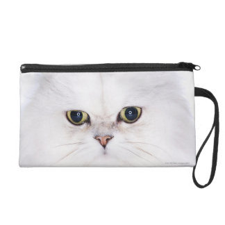 Studio shot of white Persian cat Wristlet