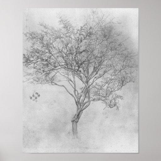 Study of a Lemon Tree - 1859 - Poster