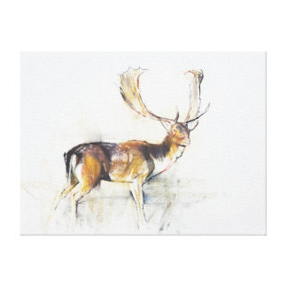 Study of a Stag Canvas Print