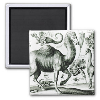 Study of Animals and Flowers, engraved Square Magnet