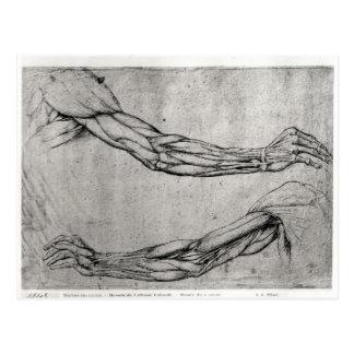 Study of Arms Postcard