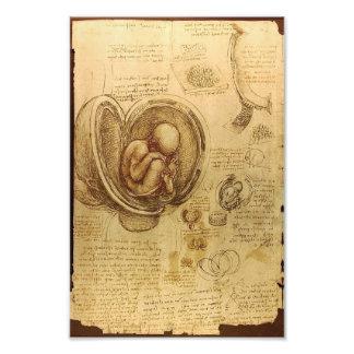 Study of baby foetus by Leonardo da Vinci Photo Art