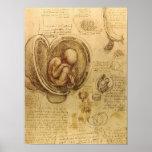 Study of baby foetus by Leonardo da Vinci Poster