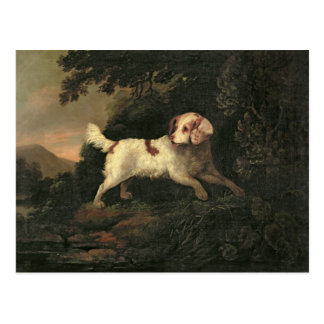 Study of Clumber Spaniel Postcard