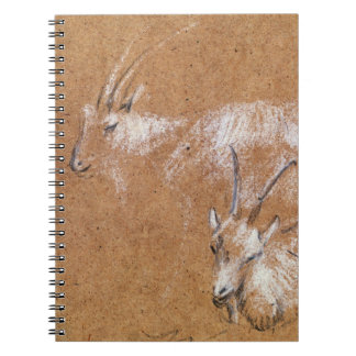 Study of Goats (drawing) Notebooks