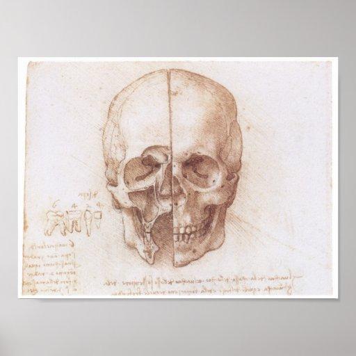Study of the Human Skull, Leonardo da Vinci