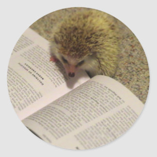 Studying Hedgehog Sticker