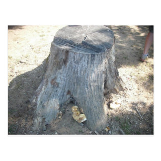 Stump Postcard