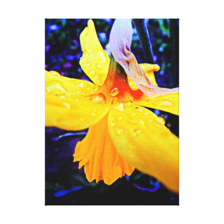 Stunning Abstract Daffodil With Raindrops Canvas Print