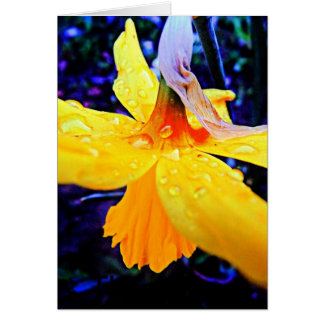 Stunning Abstract Daffodil With Raindrops Card