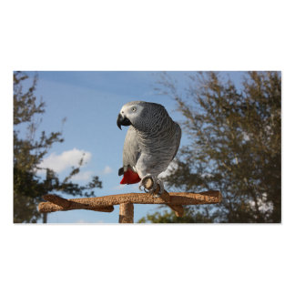 Stunning African Grey Parrot Pack Of Standard Business Cards
