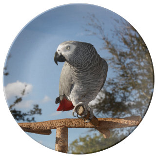 Stunning African Grey Parrot Porcelain Plate