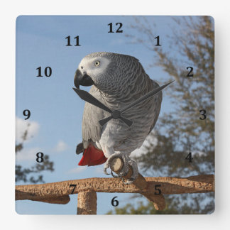 Stunning African Grey Parrot Square Wall Clock