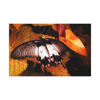 Stunning Autumnal Butterfly Canvas Print