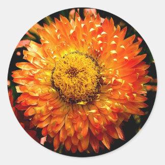 Stunning Bright Orange Chrysanthemum Flower Classic Round Sticker