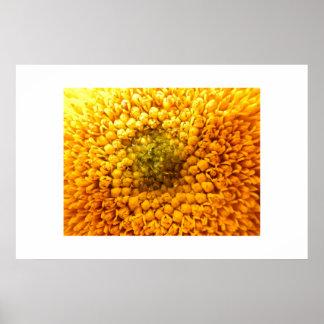 Stunning Bright Yellow Sunflower Center Poster