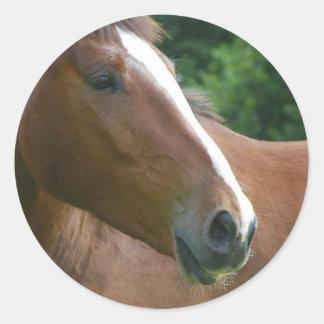 Stunning Brown Thoroughbred Horse Sticker
