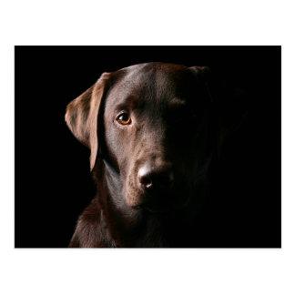 Stunning Chocolate Labrador Postcard