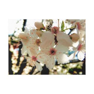 Stunning Classic White Sakura Blossom Canvas Print