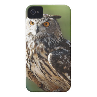 Stunning Eagle Owl with Orange Eyes Blackberry Bold Covers