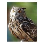 Stunning Eagle Owl with Orange Eyes Post Card
