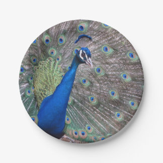 Stunning Full Vintage Peacock 7 Inch Paper Plate