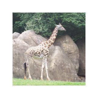 Stunning Giraffe Gallery Wrap Canvas