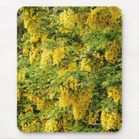 Stunning Golden Chain / Laburnum Tree Mouse Mat