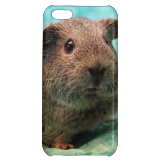Stunning Guinea Pig Cell Phone Case Cover For iPhone 5C