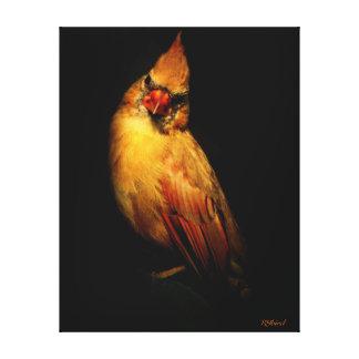 Stunning Juvenile Female Cardinal on Black Canvas Canvas Prints