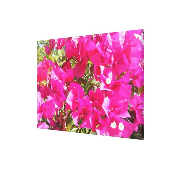 Stunning Large Size Pink Bougainvillea Close up Canvas