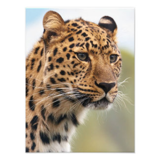 Stunning leopard portrait photo print