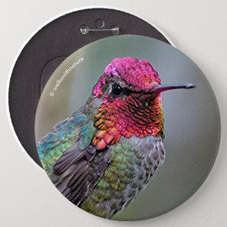 Stunning Male Anna's Hummingbird on the Plum Tree 6 Cm Round Badge