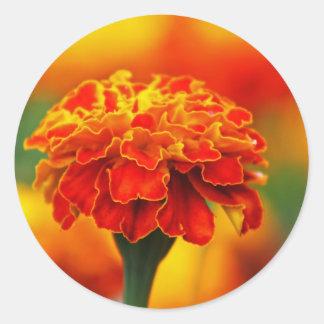 Stunning Orange Marigold Classic Round Sticker