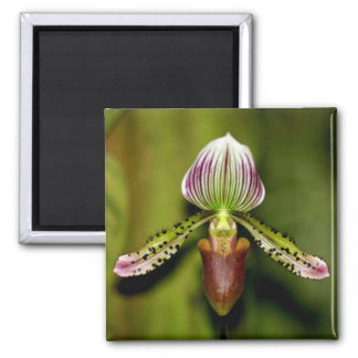 Stunning Orchid Magnet