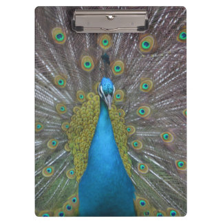 Stunning Peacock Clipboard