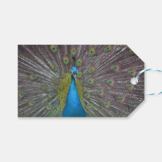 Stunning Peacock Gift Tags