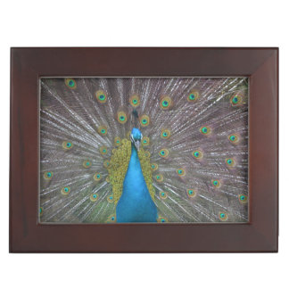 Stunning Peacock Keepsake Box