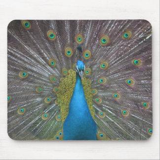 Stunning Peacock Mouse Mat