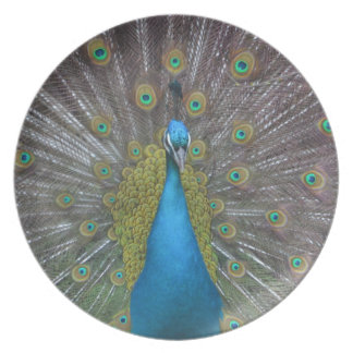 Stunning Peacock Plate