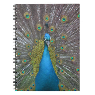 Stunning Peacock Spiral Notebook