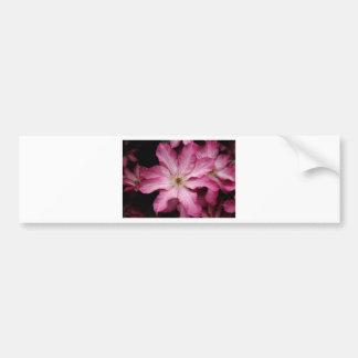 Stunning pink clematis print bumper sticker