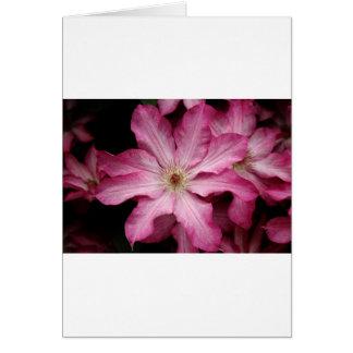 Stunning pink clematis print card