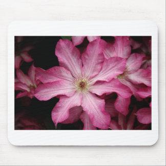 Stunning pink clematis print mouse mat